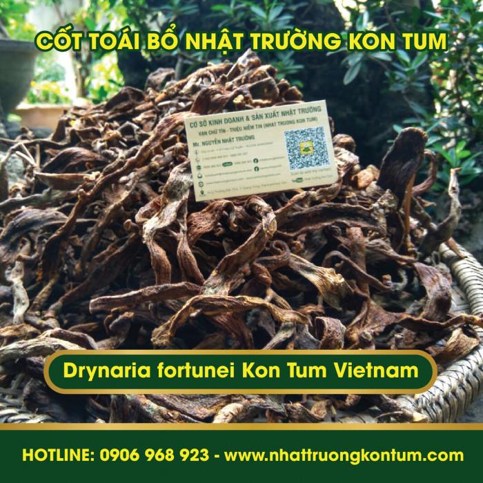 Cốt Toái Bổ - Tắc Kè Đá Kon Tum Nhật Trường - Drynaria fortunei - Túi 1kg