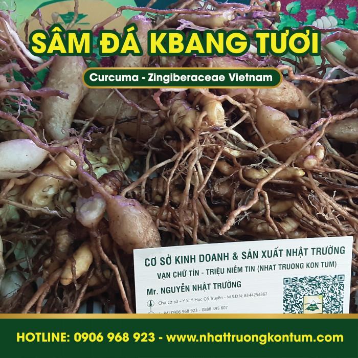 Sâm Đá Kbang Kon Tum Việt Nam Củ Tươi - Curcuma Zingiberaceae Vietnam - Túi 1kg